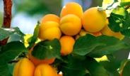 Cilt Bakımı İçin Şifalı Yağlar ve Bitkiler
