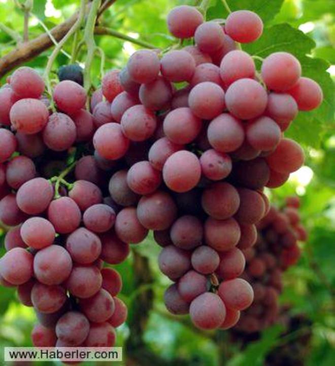 İçeriğindeki yüksek antioksidantlardan dolayı kalp hastalıklarında olumlu etkisi vardır. Özellikle çekirdekli kuru kırmızı üzümün tüketimi önerilir.