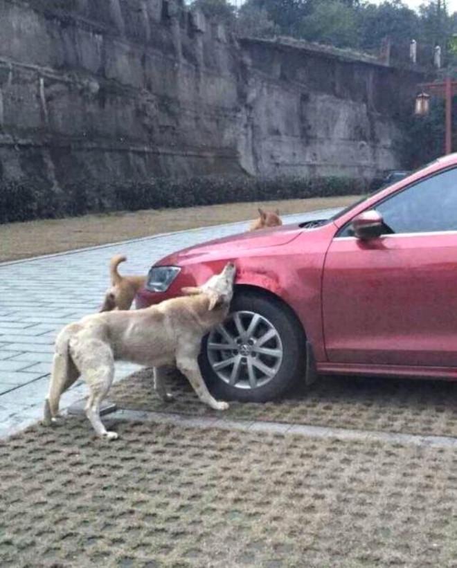 Korkudan arabasına yaklaşamayan araç sahibi uzaktan olayı görüntülemekle yetindi.