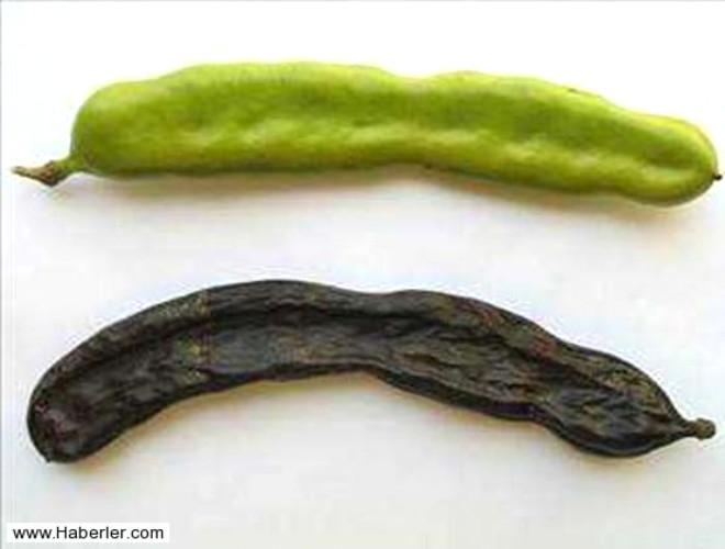 Meyveleri taze ve kuru olarak yenir. Çekirdeklerinden de yararlanılır. Yaprakları ve dalları kurutulup kaynatılarak keçiboynuzu çayı yapılabilir.