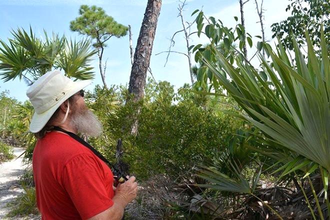 """Dünyanın en zehirli böceği, dünyanın en zehirli yılanı ya da dünyanın en zehirli bitkisini duymuş olabilirsiniz. Peki dünyanın en zehirli ağacını? Guinness Rekorlar Kitabına girecek kadar tehlikeli olan ve """"Dünyanın En Zehirli Ağacı"""" olarak ünlenen Manchineel Ağacı, en ufak bir dokunuşla bile deri üzerinde yanıklar oluşturabiliyor."""