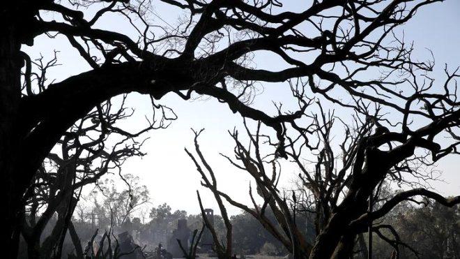Eski kocasını ağacın altında bulan kadın, sağlık ekiplerine haber verdi.